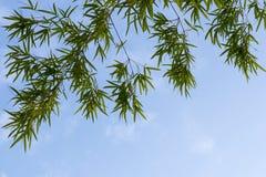 O bambu sae do isolado do fundo Fotografia de Stock Royalty Free