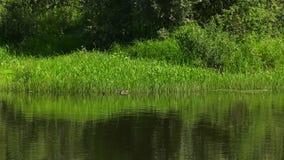 O banco de rio na floresta video estoque