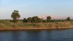 O banco do Nilo do rio em Egito com palmas e grama filme