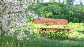 O banco velho no jardim da cereja é iluminado pelo sol video estoque