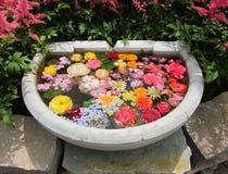 O banho do pássaro com a vária flor do verão floresce flutuando na água Fotografia de Stock