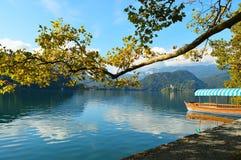 O barco através da árvore sobre o lago sangrou Eslovênia Imagem de Stock