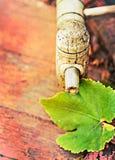 O barril e as uvas de vinho folheiam, cores retros Foto de Stock Royalty Free