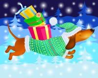 O bassê engraçado no inverno veste-se com os presentes no fundo de árvores de Natal Imagens de Stock