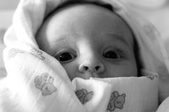 O bebê Foto de Stock