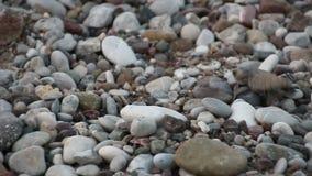 O bebê da tartaruga rasteja ao mar Cirali, Turquia vídeos de arquivo