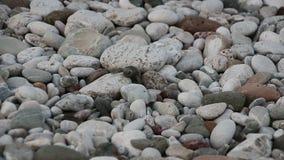 O bebê da tartaruga rasteja ao mar Cirali, Turquia filme