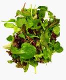 O bebê deixa a salada isolada Imagem de Stock Royalty Free