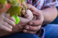 O bebê e o pai guardam a planta verde foto de stock royalty free