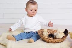 O bebê está jogando com pintainhos pequenos Foto de Stock Royalty Free