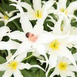 O bebê recém-nascido dorme em um prado entre flores bonitas fotos de stock royalty free