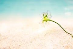 O beira-mar abstrato floresce no dia de verão da praia do mar da areia Foto de Stock Royalty Free