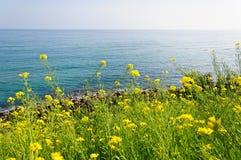 O beira-mar com as flores amarelas da violação Imagem de Stock Royalty Free
