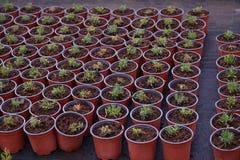 O ber??rio das plantas e das ?rvores para jardinar imagens de stock royalty free