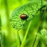 o besouro olha como a joia de madeira Foto de Stock
