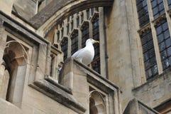 O Birdlife do banho Imagem de Stock Royalty Free