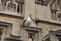O Birdlife do banho Fotografia de Stock