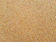 O blackground da praia no tempo da tarde imagem de stock