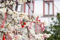 O búlgaro diferente Martenitsa assina na árvore de florescência Imagens de Stock
