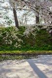 O blizzardHanafubuki da flor de cerejeira e o carpetHanaikada da cereja no fosso exterior de Hirosaki estacionam, Aomori, Tohoku, Fotografia de Stock