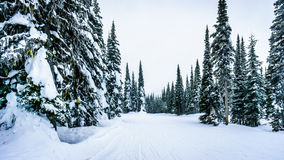 O bloco profundo da neve e as árvores cobertos de neve na vila alpina de Sun repicam Fotografia de Stock