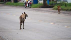 O bocejo do cão disperso Foto de Stock