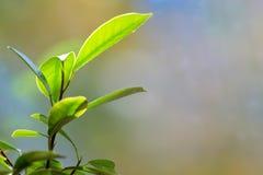 O bonsai sae de detalhes imagem de stock royalty free