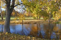 O bordo do outono com amarelo e verde deixa o crescimento nos bancos o Imagem de Stock Royalty Free