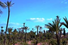 O bosque da palma imagem de stock royalty free