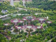 O bosque de Supertree em jardins pela baía em Singapura fotografia de stock royalty free