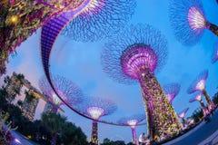 O bosque de Supertree em jardins pelo louro Imagens de Stock