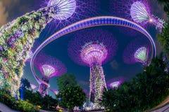 O bosque de Supertree em jardins pelo louro Fotos de Stock Royalty Free