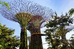 O bosque de Supertree em jardins pelo louro foto de stock