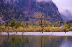 O bosque e os lagos colorized fotos de stock