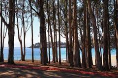 O bosque na Costa do Pacífico. imagens de stock royalty free