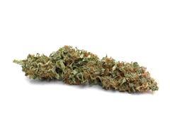 O botão da marijuana (cannabis) acima fecha-se e isolou-se Imagens de Stock