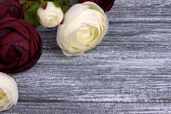 O botão de ouro vermelho e branco floresce o ranúnculo no fundo de madeira cinzento Copie o espaço Imagens de Stock Royalty Free