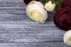 O botão de ouro vermelho e branco floresce o ranúnculo no fundo de madeira cinzento Copie o espaço Imagem de Stock Royalty Free
