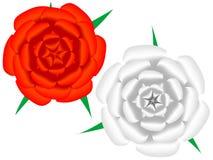 O branco e o vermelho levantaram-se Fotos de Stock Royalty Free