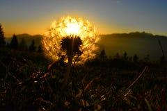 O brilho da bola da luz da natureza fotografia de stock