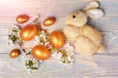 O brinquedo do coelho, os ovos de easter, a cereja da mola ou o abricó dourado florescem Imagens de Stock
