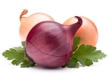 O bulbo e a salsa vegetais da cebola saem da vida imóvel Imagens de Stock