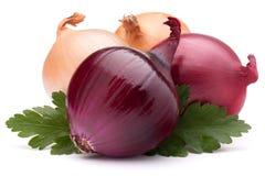 O bulbo e a salsa vegetais da cebola saem da vida imóvel Imagens de Stock Royalty Free