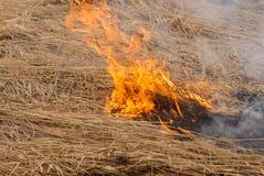 O burning da grama seca Um verão árido smog fotos de stock royalty free