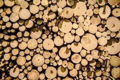 O cânhamo abatido pequeno, ramos é exibido perto de uma altura diferente para o fundo Imagens de Stock