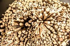 O cânhamo abatido pequeno, ramos é exibido perto de uma altura diferente para o fundo Fotos de Stock Royalty Free