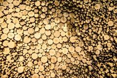 O cânhamo abatido pequeno, ramos é exibido perto de uma altura diferente para o fundo Imagens de Stock Royalty Free
