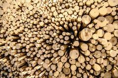 O cânhamo abatido pequeno, ramos é exibido perto de uma altura diferente para o fundo Imagem de Stock