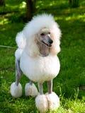 O cão é o melhor amigo fotos de stock royalty free