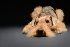 O cão é seu melhor amigo fotografia de stock royalty free